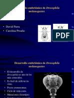 Desarrollo Embrionario de La Mosca (Lab).