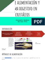Tipos de Alimentación y Sistema Digestivo en Crustáceos