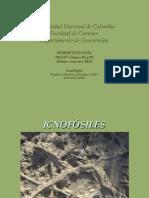 5 Icnofósiles