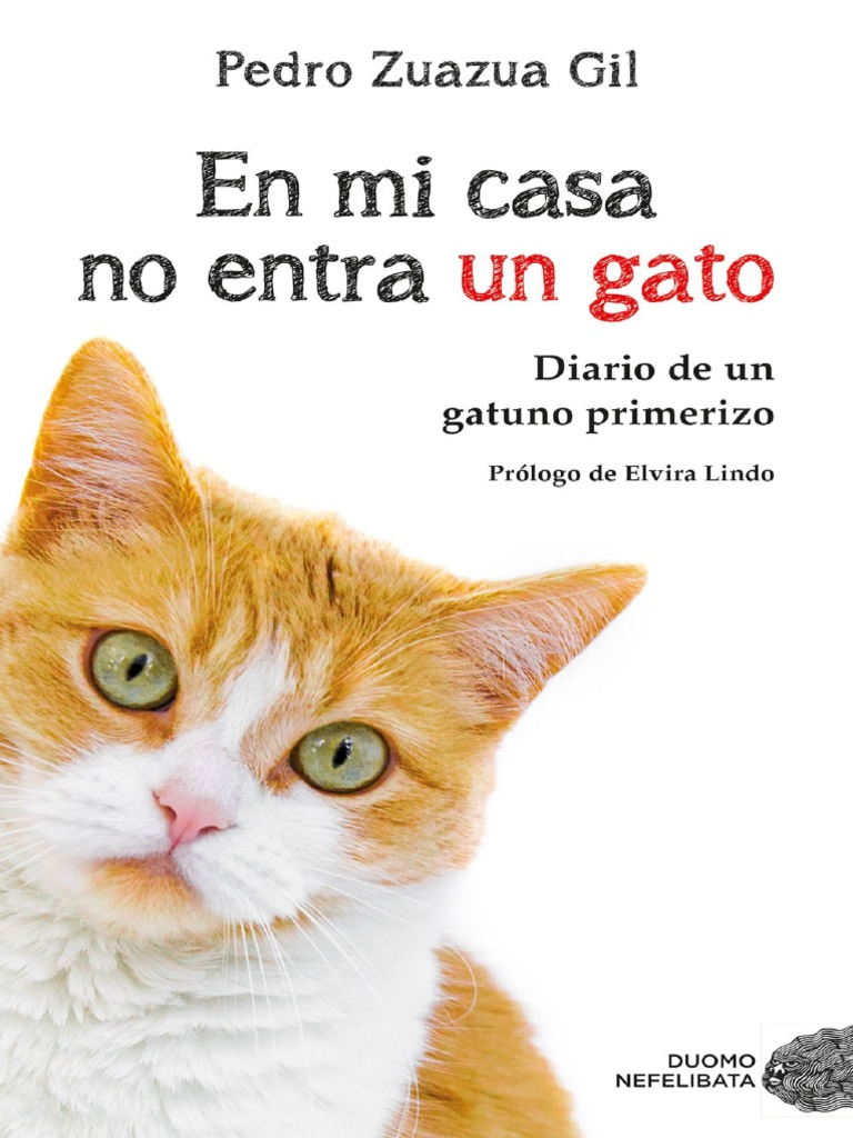 Buenos días Grumpy Cat Taza Regalo Broma Divertido Regalo De Cumpleaños Amigos de la familia
