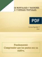 3. Morfología y Taxonomía de Pastos y Forrajes Tropicales Ok