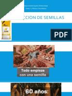 Produccion de Semillas