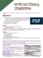 ANATOMIA DE LA CORNEA Y CONJUNTIVA.pdf