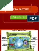Biomol Sintesa Protein