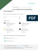 Aglaonema Micropropagation