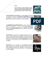 Ejemplos de Dominio Archea