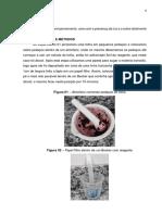 RELATORIO BIOLOGIA
