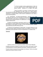 Paleontologia T.