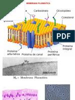Membrana Plasmática e Transportes