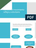 Control del movimiento reflejo y voluntario.pptx