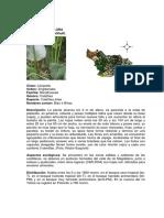 apendice_2.18_flora