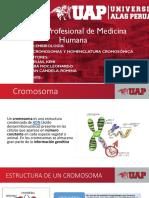 Cromosomas y Nomenclatura