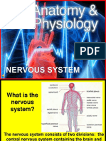 179 Anatomy Nervous System