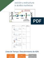 Composición y estructura de los ácidos nucleicos cLASE II.pptx