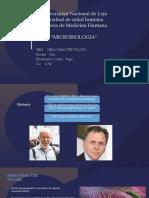Informe h. Pylori