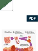 Aula 8- Oncogênese