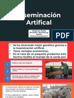 Inseminacion-artifical-porcinos