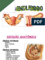 Sistema Genital Feminino