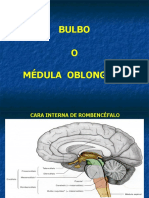 Bulbo Y Protuberancia cerebral