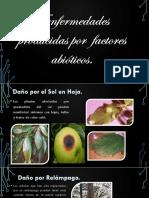 Enfermedades producidas por factores abióticos en las plantas