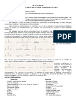 PRACTICA N° 06 ENSAYOS DE IDENTIFICACION DE ALDEHIDOS YCETONAS