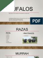 Bufalo Ss
