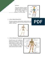 El Sistema Óseo.pdf