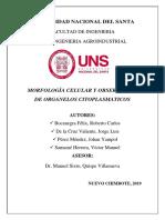PRACTICA 7- MORFOLOGIA CELULAR Y OBSERVACION DE ORGANELOS CITOPLASMATICOS.docx