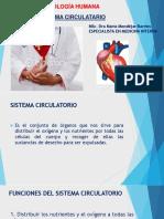 3.1 Sistema Circulatorio .