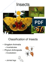 Insects are.ppt