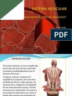 85357488-Sistema-Muscular.ppt