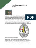 El Mito Del Cerebro Izquierdo y El Cerebro