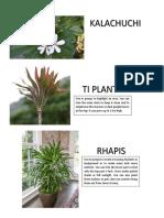 LOW MAINTENANCE PLANTS.docx