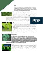 ROMERO Medicinales Plantes