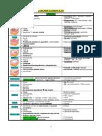 Lesiones Elementales (Resumen)