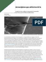Los Gusanos Microscópicos Que Advierten de La Desertización - Ciencia - EL PAÍS