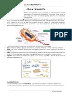 Cel Procariota - Membrana Plasmatica (2)
