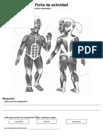 Ficha de actividad ciencia MUSCULOS.docx