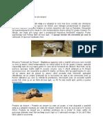 Animale din deșert.docx