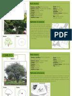 Catalogo Vegetacion