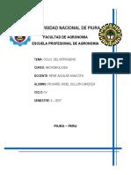 CICLO DEL NITROGENO.docx