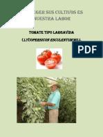 AGROINDUSTRIA TOMATE.docx