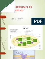 Ultraestructura de Cloroplasto