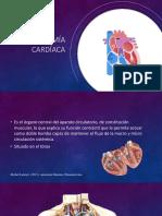 Anatomía Cardiaca Final