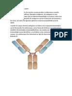 Antigeno y Anticuerpo
