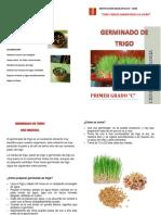 GERMINADO DE TRIGO  DIPTICO.docx