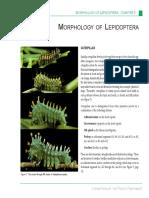 Lepidoptera Morphology