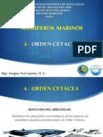 4. Orden Cetáceos - Mysticetos