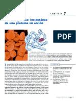 Hemoglobina Una Molécula Modelo Para El Investigador