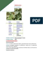 INFORMACIÓN DENDROLOGICA de danilo.docx